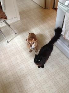 photo of the dog and cat